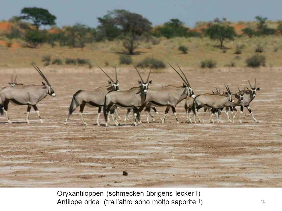 Oryxantiloppen (schmecken übrigens lecker !) Antilope orice (tra laltro sono molto saporite !) 40