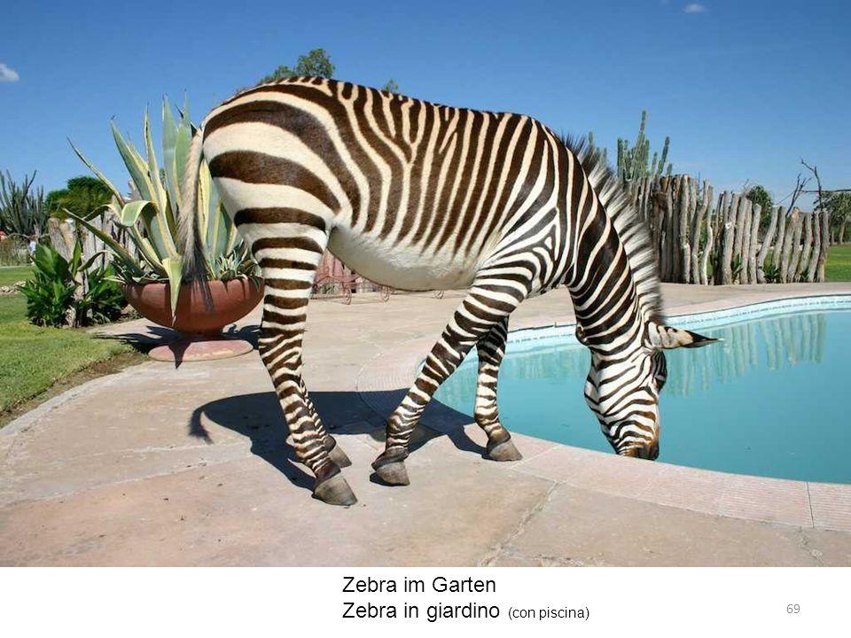 Zebra im Garten Zebra in giardino (con piscina) 69