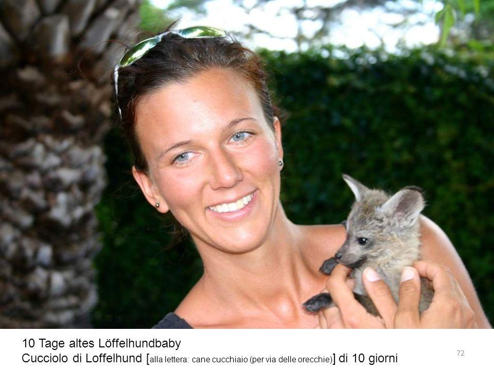 10 Tage altes Löffelhundbaby Cucciolo di Loffelhund [ alla lettera: cane cucchiaio (per via delle orecchie) ] di 10 giorni 72
