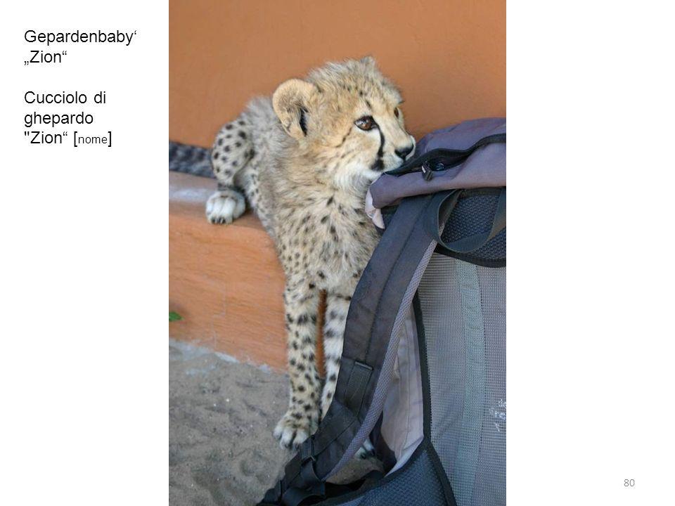 Gepardenbaby Zion Cucciolo di ghepardo Zion [ nome ] 80