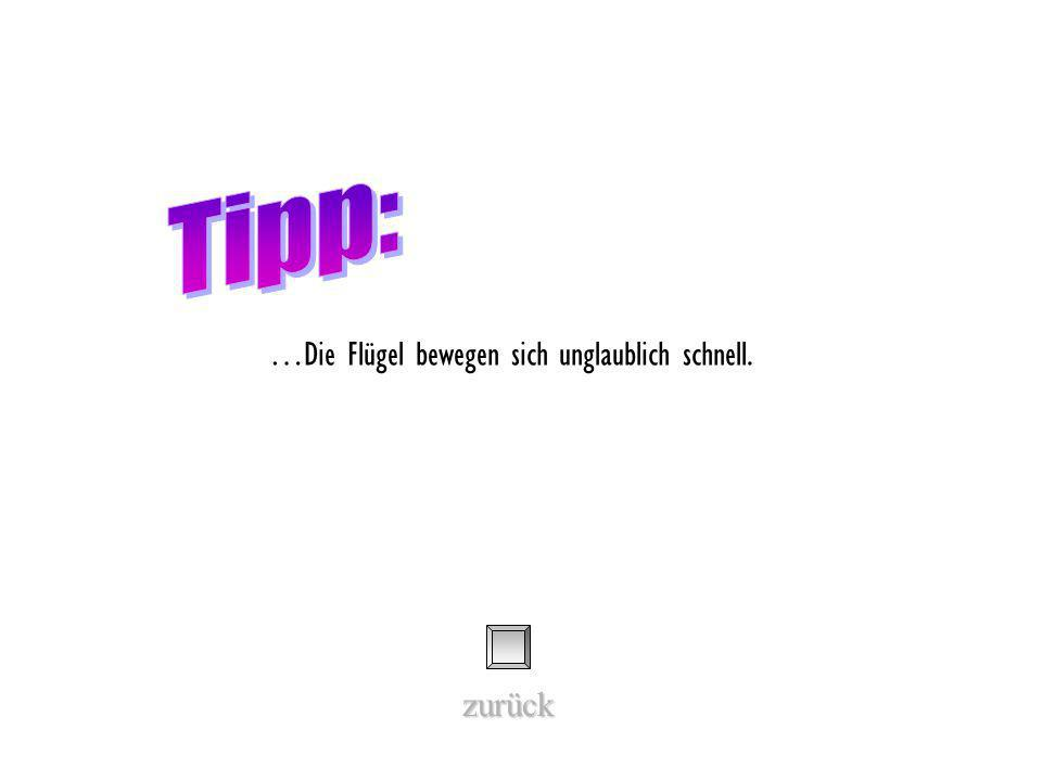 Welche Flugtechnik beherrscht dieser Vogel besonders gut? Ruderflug Segelflug Rüttelflug Schwirrflug Tipp (kann man auch weglassen…)