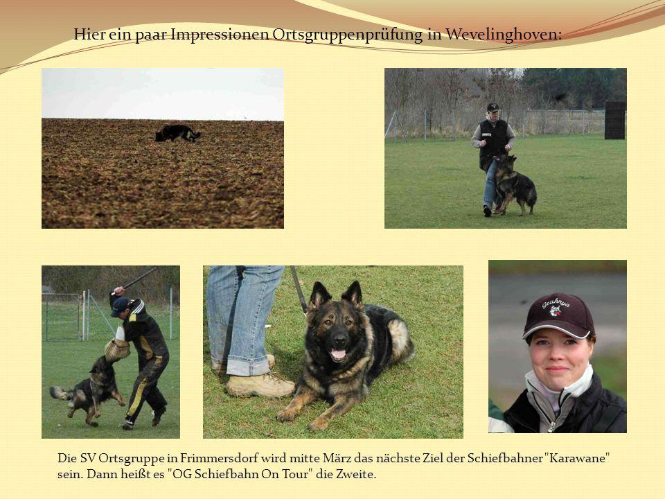 Hier ein paar Impressionen Ortsgruppenprüfung in Wevelinghoven: Die SV Ortsgruppe in Frimmersdorf wird mitte März das nächste Ziel der Schiefbahner