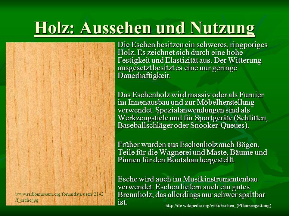 Holz: Aussehen und Nutzung Die Eschen besitzen ein schweres, ringporiges Holz.