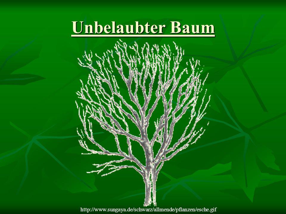 Unbelaubter Baum http://www.sungaya.de/schwarz/allmende/pflanzen/esche.gif