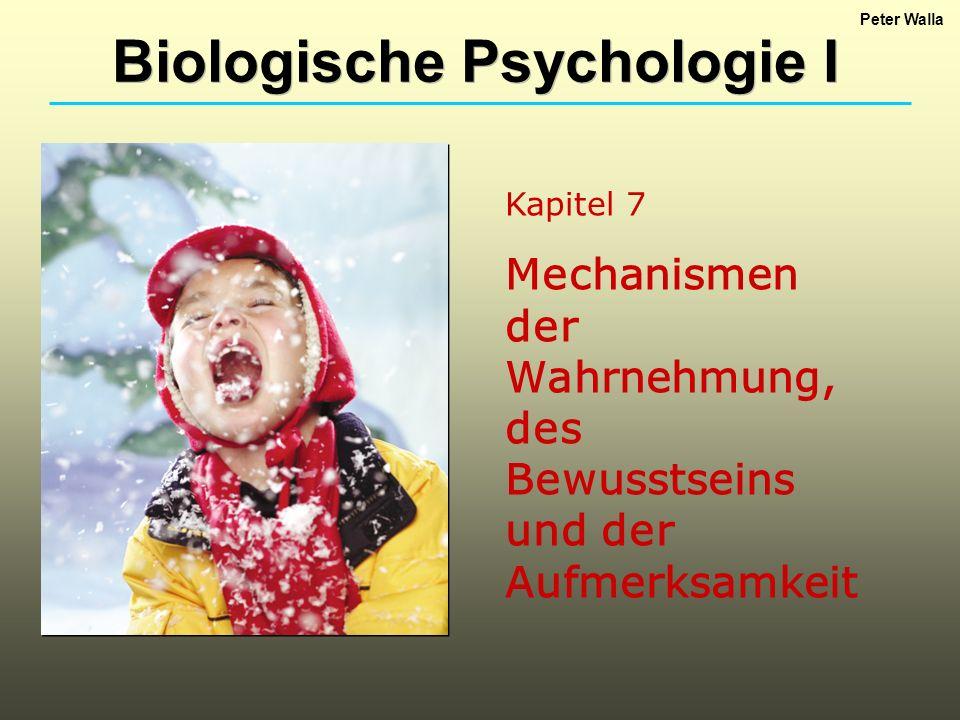 Kapitel 7 Mechanismen der Wahrnehmung, des Bewusstseins und der Aufmerksamkeit Biologische Psychologie I Peter Walla