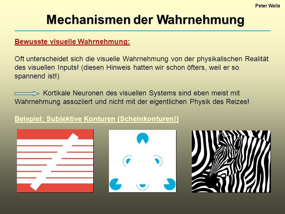 Mechanismen der Wahrnehmung Peter Walla Bewusste visuelle Wahrnehmung: Oft unterscheidet sich die visuelle Wahrnehmung von der physikalischen Realität