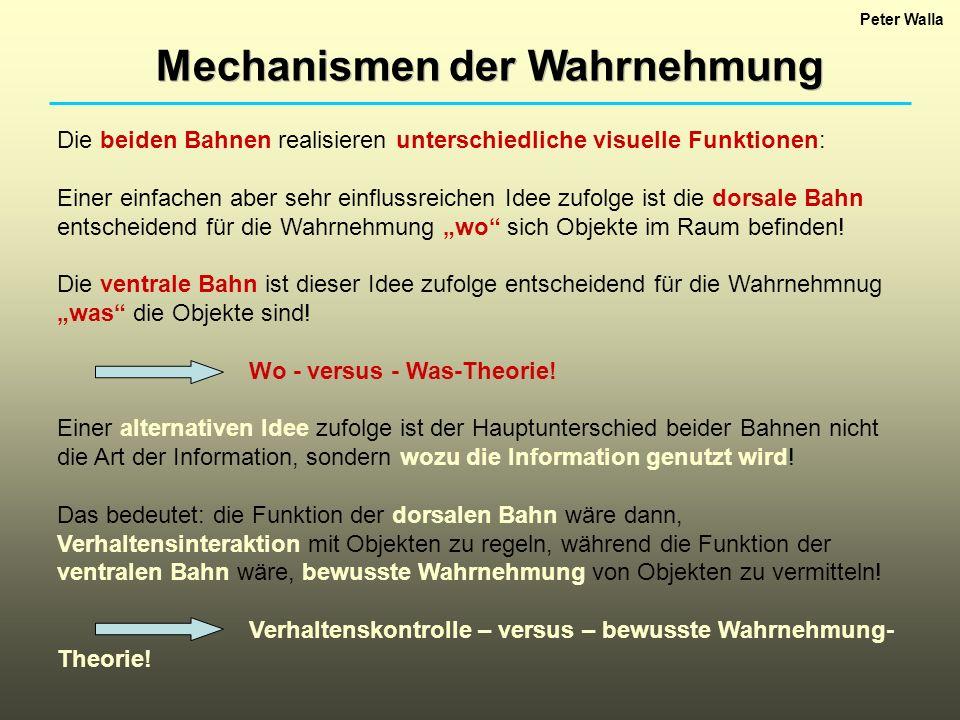 Mechanismen der Wahrnehmung Peter Walla Die beiden Bahnen realisieren unterschiedliche visuelle Funktionen: Einer einfachen aber sehr einflussreichen