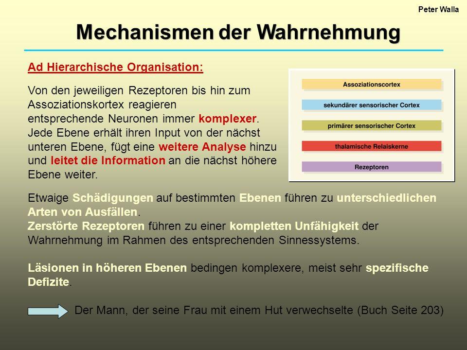 Mechanismen der Wahrnehmung Peter Walla Ad Hierarchische Organisation: Von den jeweiligen Rezeptoren bis hin zum Assoziationskortex reagieren entsprec