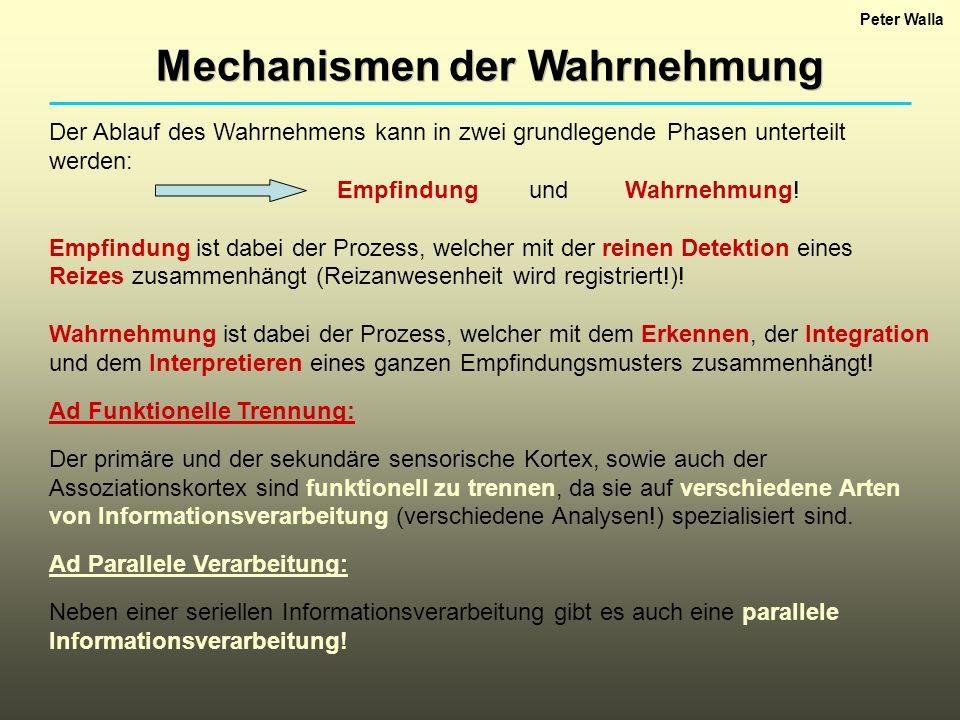Mechanismen der Wahrnehmung Peter Walla Der Ablauf des Wahrnehmens kann in zwei grundlegende Phasen unterteilt werden: EmpfindungundWahrnehmung! Empfi