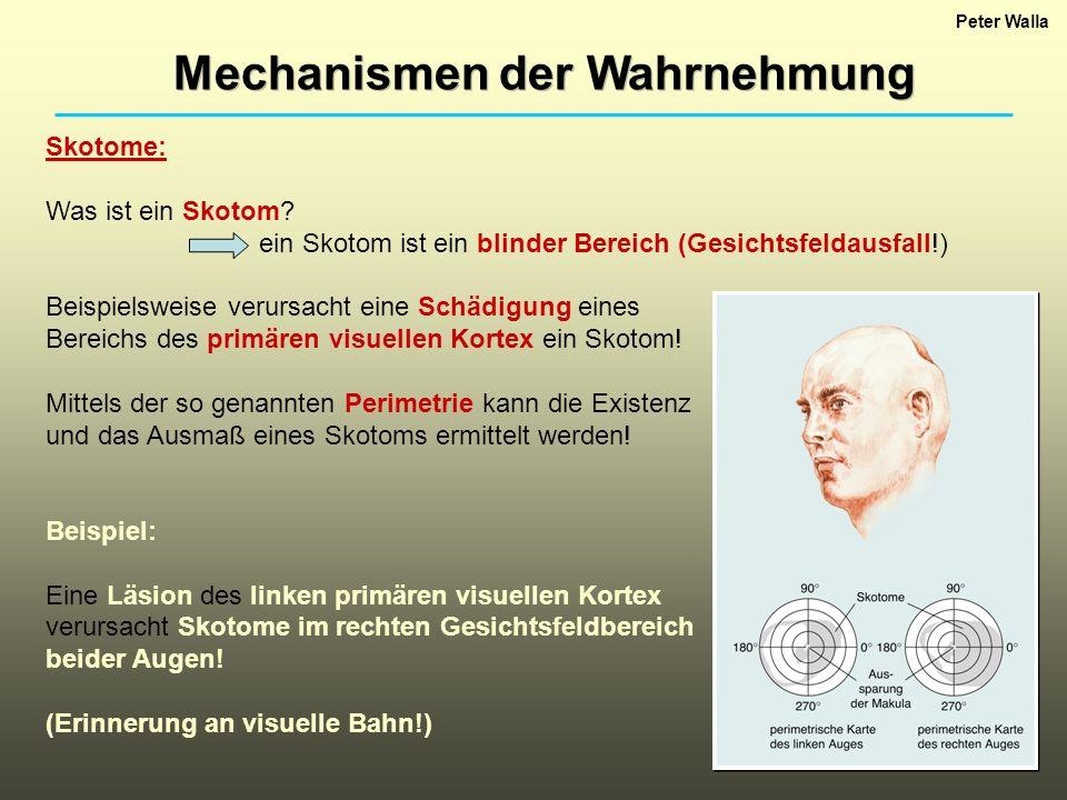 Mechanismen der Wahrnehmung Peter Walla Skotome: Was ist ein Skotom? ein Skotom ist ein blinder Bereich (Gesichtsfeldausfall!) Beispielsweise verursac