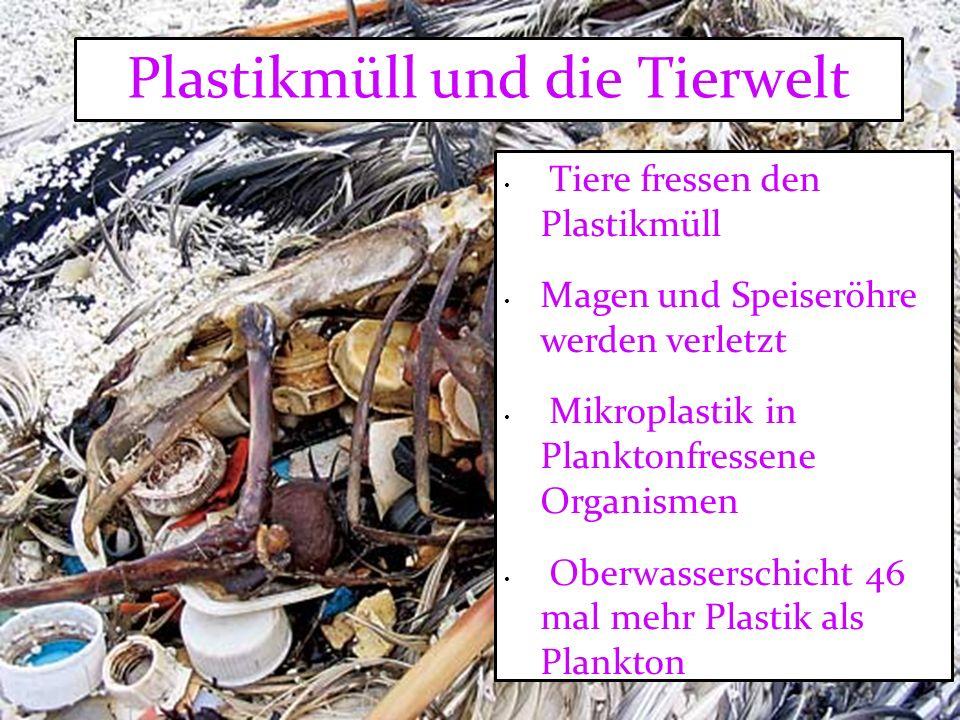 Plastikmüll und die Tierwelt Tiere fressen den Plastikmüll Magen und Speiseröhre werden verletzt Mikroplastik in Planktonfressene Organismen Oberwasserschicht 46 mal mehr Plastik als Plankton