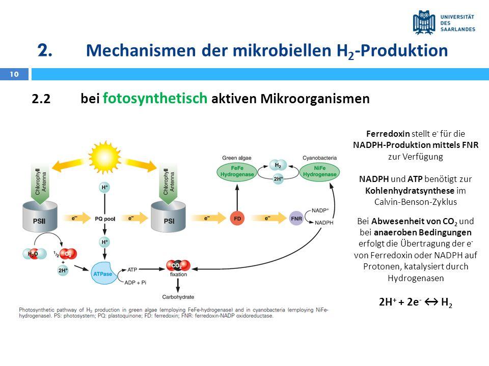 10 2.2bei fotosynthetisch aktiven Mikroorganismen Ferredoxin stellt e - für die NADPH-Produktion mittels FNR zur Verfügung NADPH und ATP benötigt zur