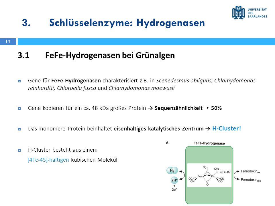 3.Schlüsselenzyme: Hydrogenasen 11 3.1FeFe-Hydrogenasen bei Grünalgen Gene für FeFe-Hydrogenasen charakterisiert z.B. in Scenedesmus obliquus, Chlamyd