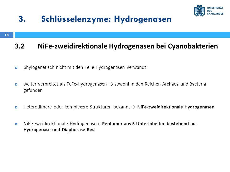 3.Schlüsselenzyme: Hydrogenasen 13 3.2NiFe-zweidirektionale Hydrogenasen bei Cyanobakterien phylogenetisch nicht mit den FeFe-Hydrogenasen verwandt we