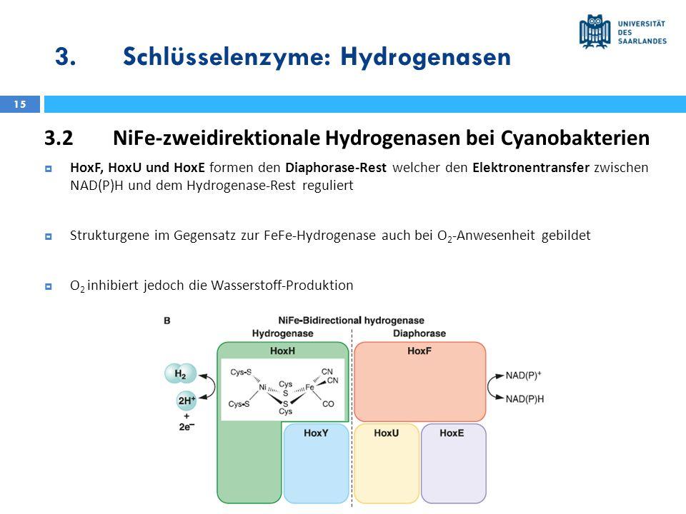 3.Schlüsselenzyme: Hydrogenasen 15 3.2NiFe-zweidirektionale Hydrogenasen bei Cyanobakterien HoxF, HoxU und HoxE formen den Diaphorase-Rest welcher den