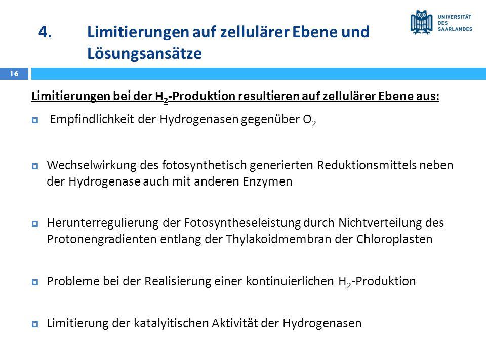 4.Limitierungen auf zellulärer Ebene und Lösungsansätze 16 Limitierungen bei der H 2 -Produktion resultieren auf zellulärer Ebene aus: Empfindlichkeit