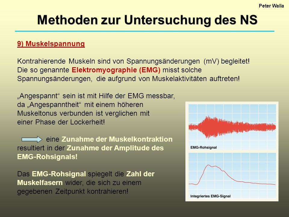 Peter Walla Methoden zur Untersuchung des NS 9) Muskelspannung Kontrahierende Muskeln sind von Spannungsänderungen (mV) begleitet.