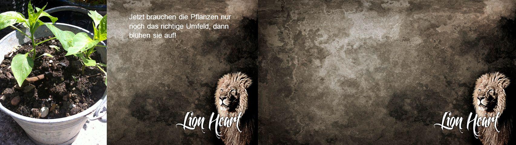 Löwen töten ein Tier mit einem gezielten Pfoten-Krallen Schlag!