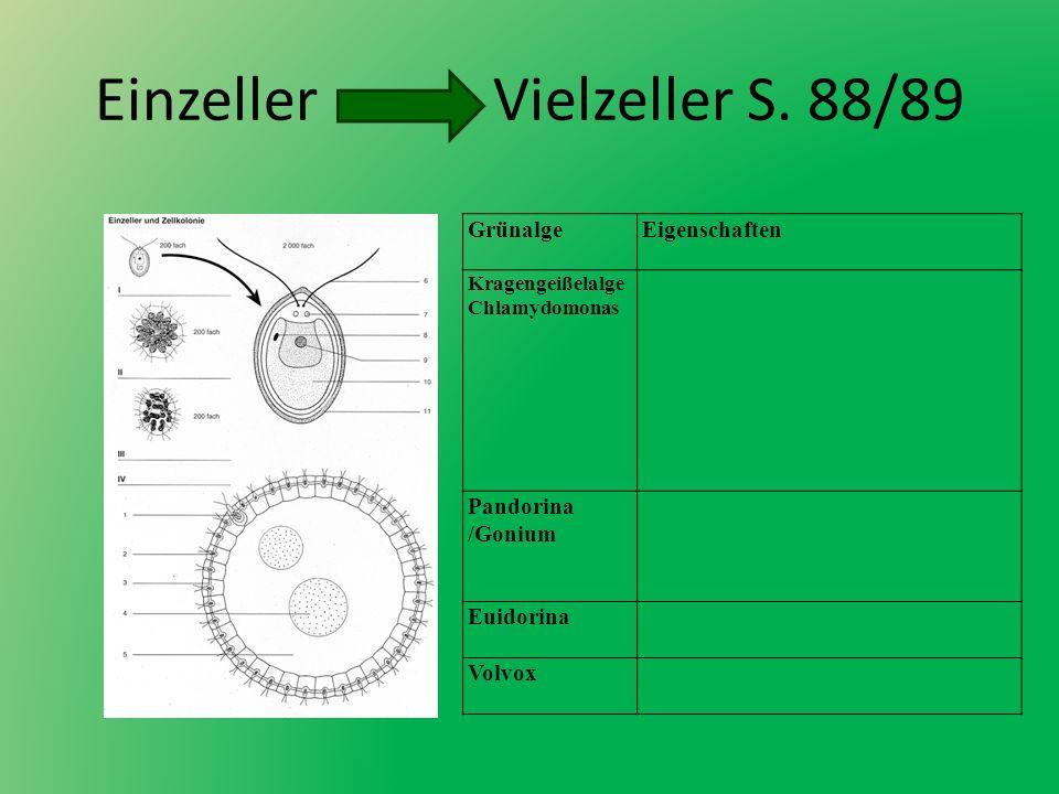Einzeller Vielzeller S. 88/89 GrünalgeEigenschaften Kragengeißelalge Chlamydomonas Pandorina /Gonium Euidorina Volvox