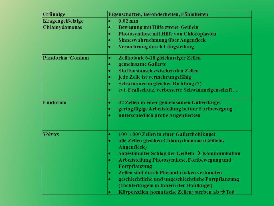 GrünalgeEigenschaften, Besonderheiten, Fähigkeiten Kragengeißelalge Chlamydomonas 0,02 mm Bewegung mit Hilfe zweier Geißeln Photosynthese mit Hilfe vo