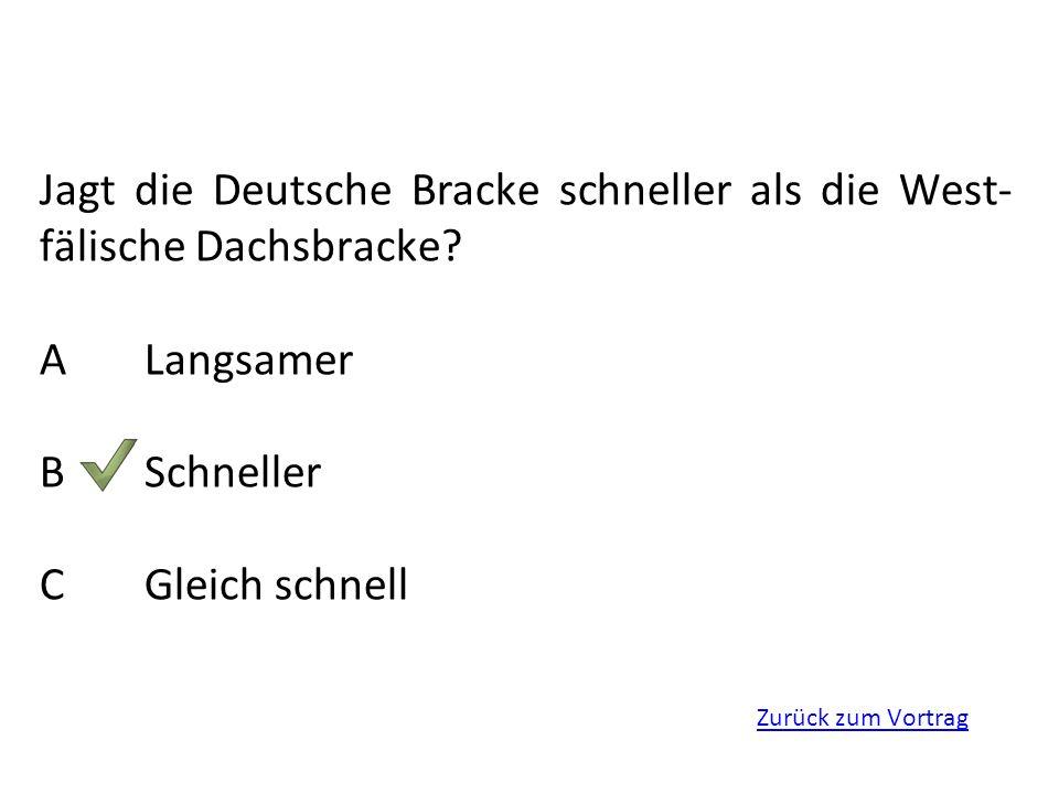 Zurück zum Vortrag Jagt die Deutsche Bracke schneller als die West- fälische Dachsbracke? ALangsamer BSchneller CGleich schnell