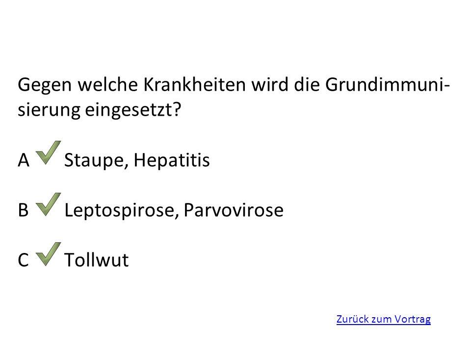 Zurück zum Vortrag Gegen welche Krankheiten wird die Grundimmuni- sierung eingesetzt? AStaupe, Hepatitis BLeptospirose, Parvovirose CTollwut