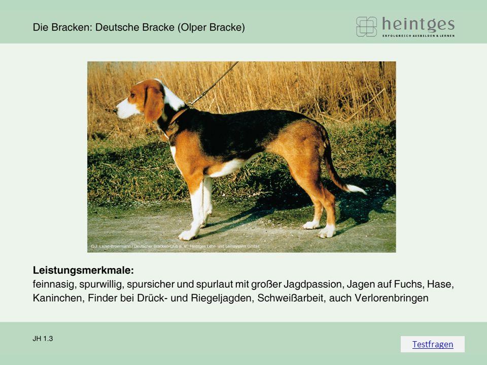 Zurück zum Vortrag Welche Anzeichen beim Hund können die Erkran- kung an Tollwut anzeigen.