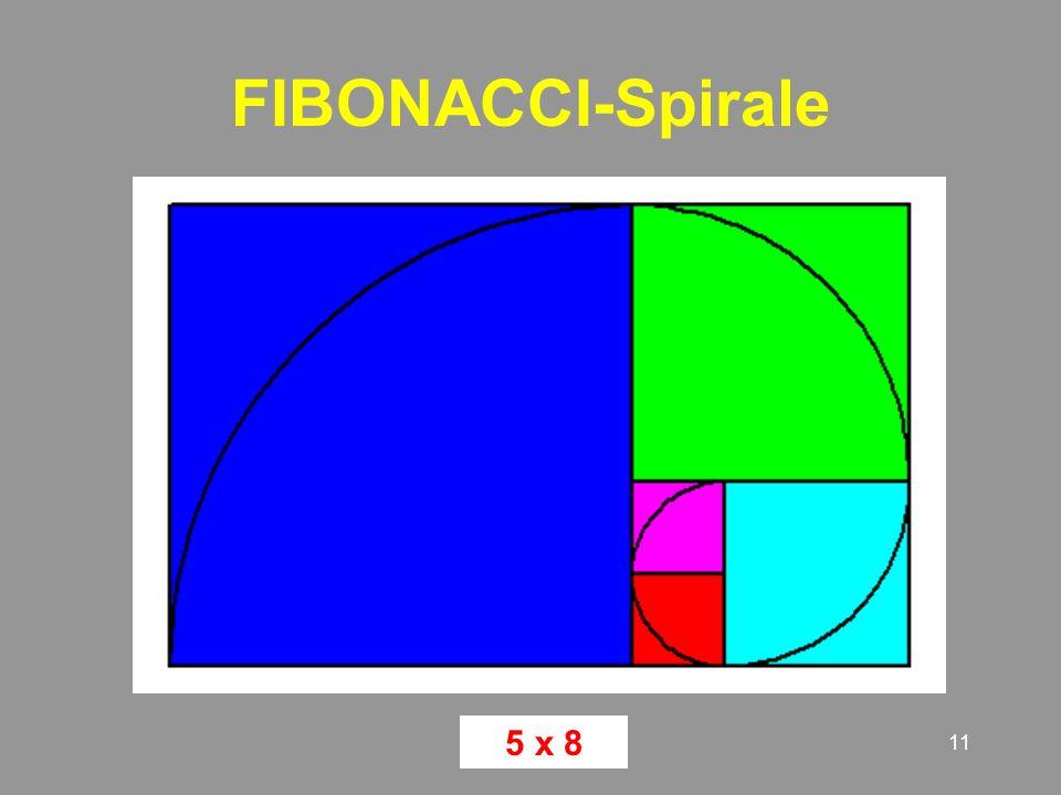 11 FIBONACCI-Spirale 5 x 8
