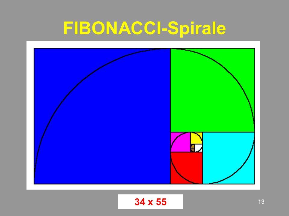 13 FIBONACCI-Spirale 34 x 55