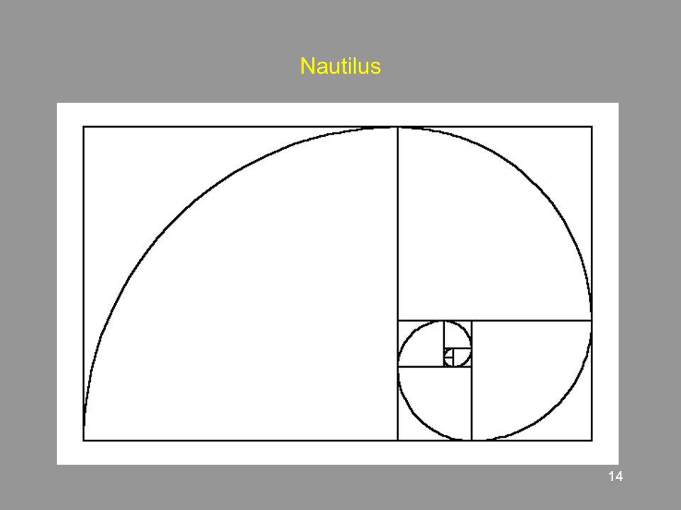 14 Nautilus