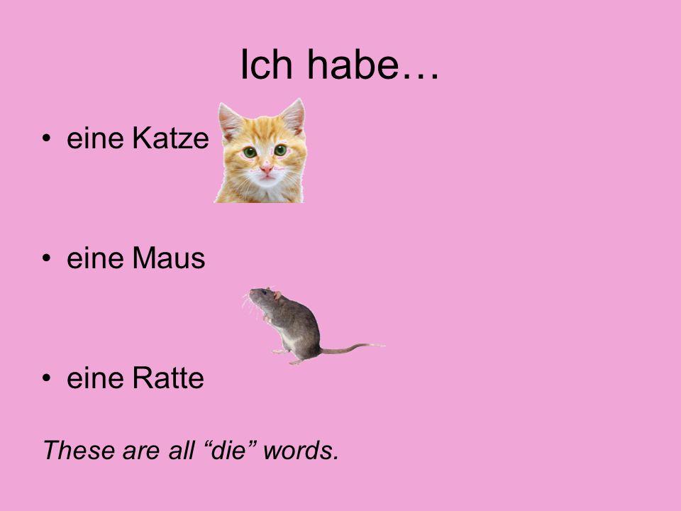 Ich habe… eine Katze eine Maus eine Ratte These are all die words.