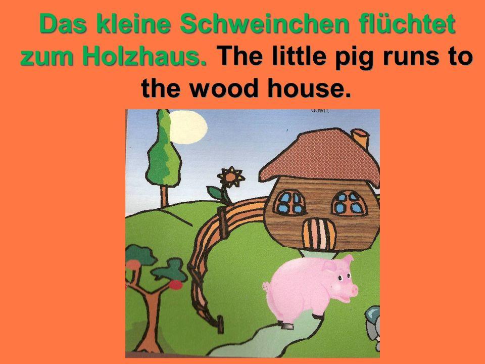 Das kleine Schweinchen flüchtet zum Holzhaus. Das kleine Schweinchen flüchtet zum Holzhaus. The little pig runs to the wood house.
