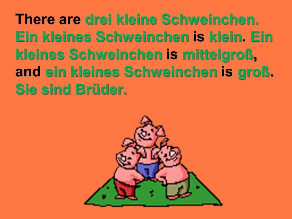 drei kleine Schweinchen. Ein kleines Schweinchen kleinEin kleines Schweinchenmittelgroß, ein kleines Schweinchen groß. Sie sind Brüder. There are drei