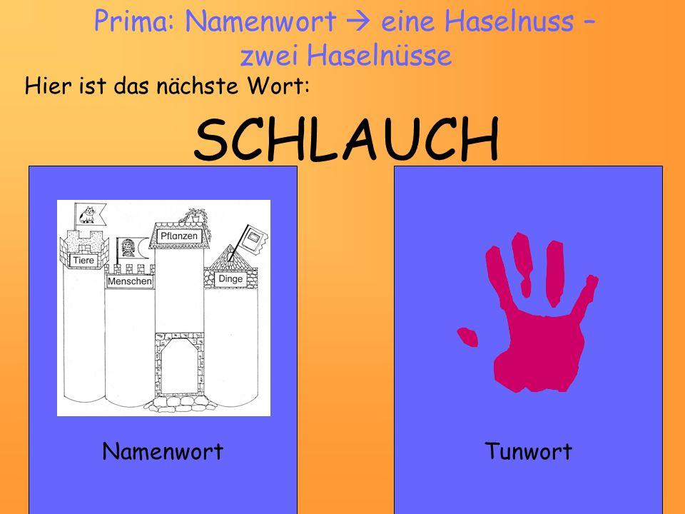 SCHLAUCH NamenwortTunwort Prima: Namenwort eine Haselnuss – zwei Haselnüsse Hier ist das nächste Wort:
