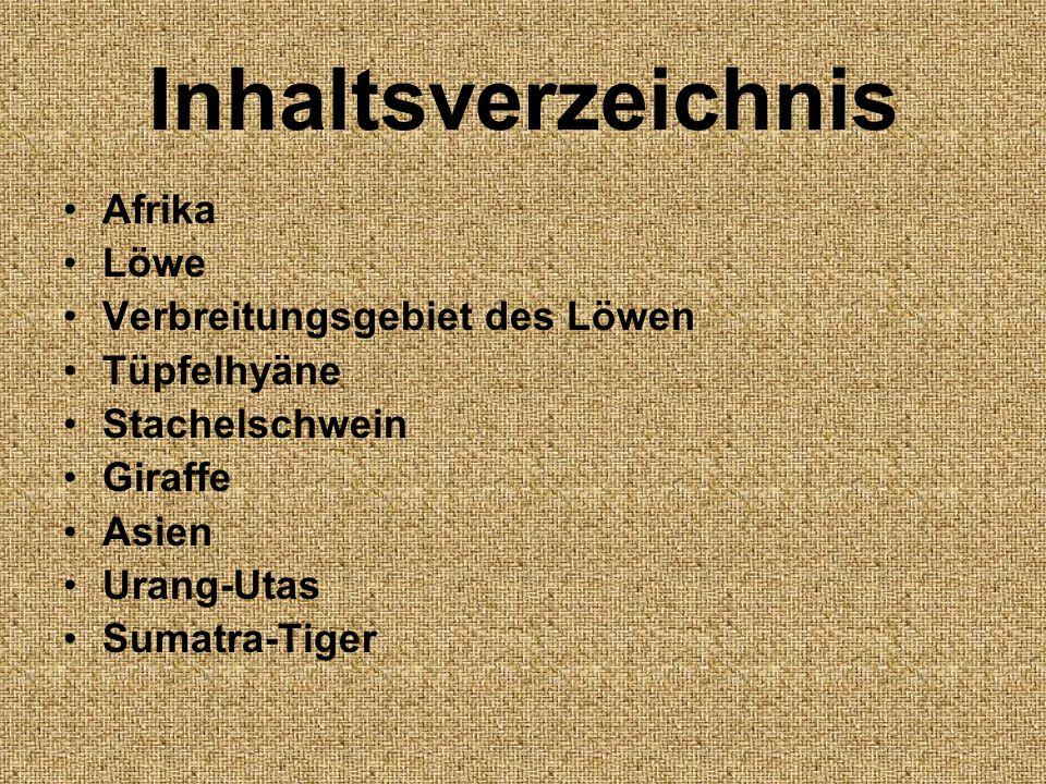 Inhaltsverzeichnis Afrika Löwe Verbreitungsgebiet des Löwen Tüpfelhyäne Stachelschwein Giraffe Asien Urang-Utas Sumatra-Tiger