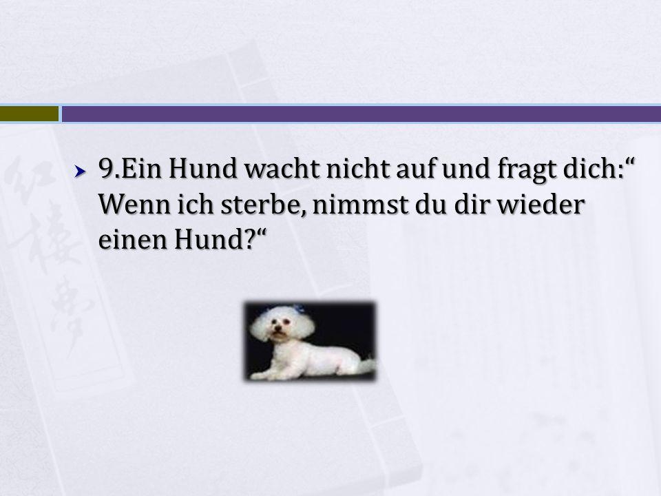 9.Ein Hund wacht nicht auf und fragt dich: Wenn ich sterbe, nimmst du dir wieder einen Hund.