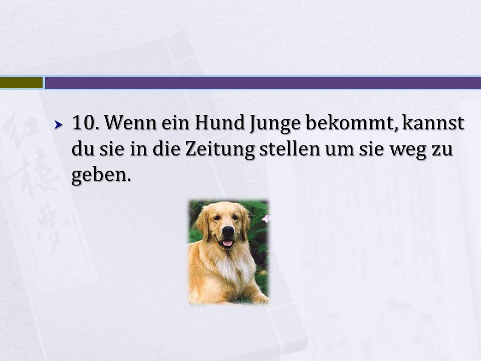 10. Wenn ein Hund Junge bekommt, kannst du sie in die Zeitung stellen um sie weg zu geben.