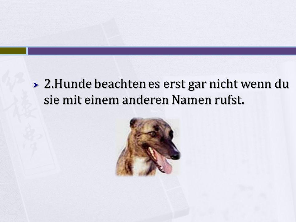 2.Hunde beachten es erst gar nicht wenn du sie mit einem anderen Namen rufst.