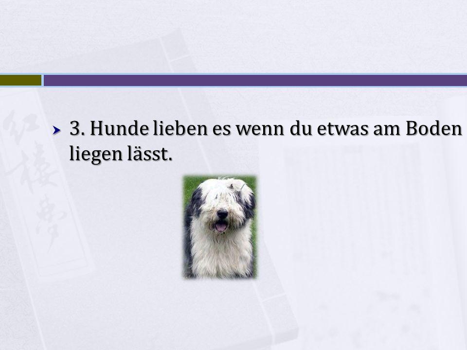 3. Hunde lieben es wenn du etwas am Boden liegen lässt.