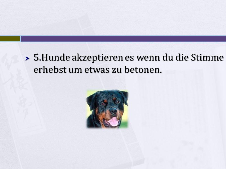 5.Hunde akzeptieren es wenn du die Stimme erhebst um etwas zu betonen.