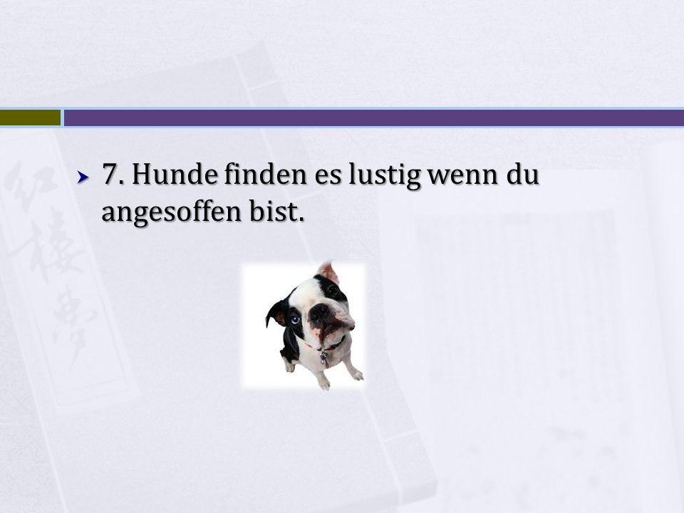 7. Hunde finden es lustig wenn du angesoffen bist.