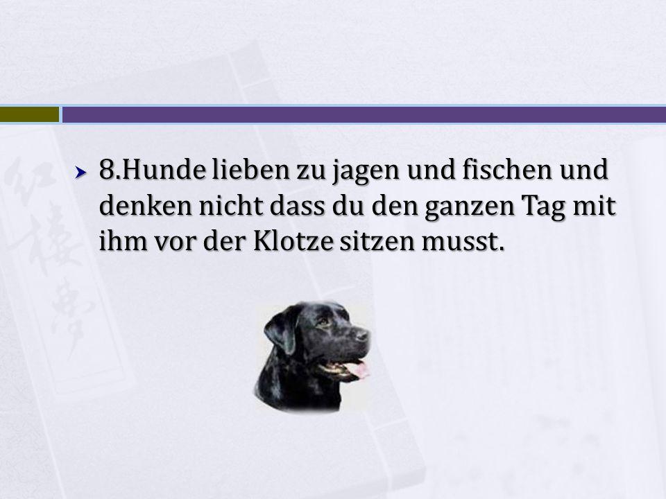 8.Hunde lieben zu jagen und fischen und denken nicht dass du den ganzen Tag mit ihm vor der Klotze sitzen musst.