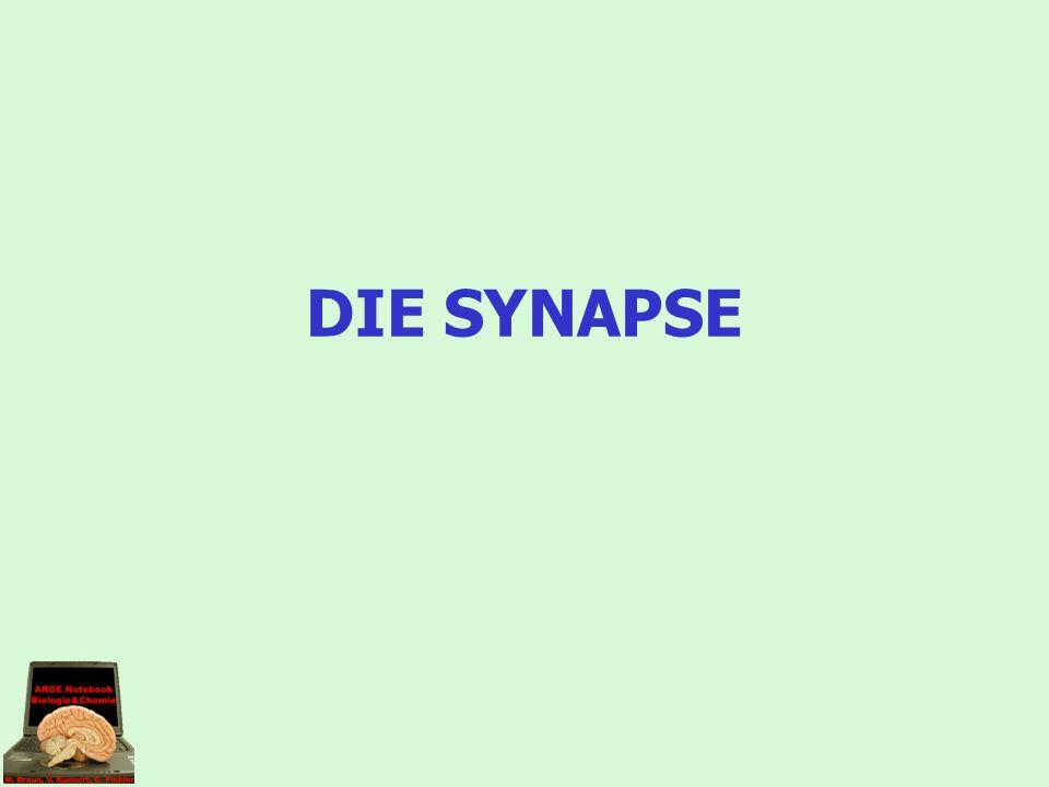 Hoffentlich habt ihr mögliche heikle Stellen der Synapse gefunden.