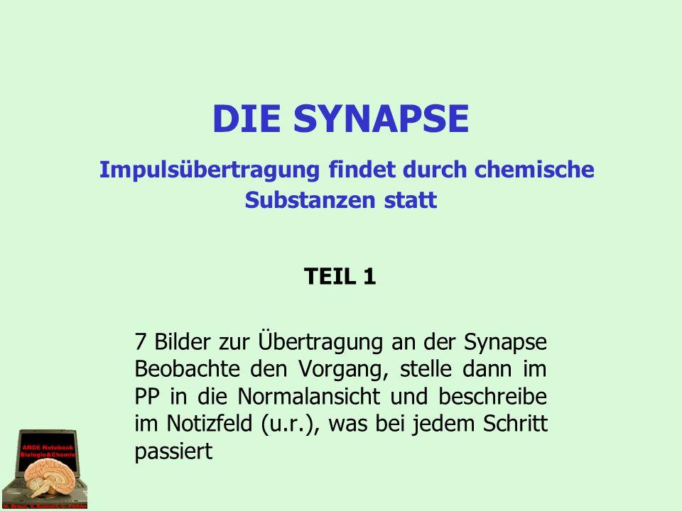 Quelle: www.mallig.de Chemische Übertragung eines Nervenimpulses an einer Synapse
