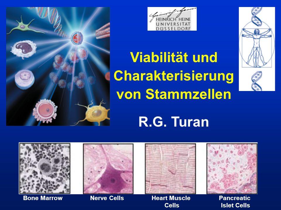 Viabilität und Charakterisierung von Stammzellen R.G. Turan Bone MarrowNerve CellsHeart Muscle Cells Pancreatic Islet Cells