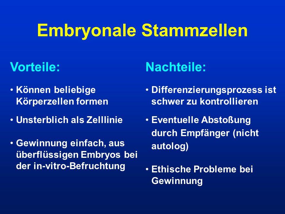 Embryonale Stammzellen Vorteile:Nachteile: Können beliebige Körperzellen formen Unsterblich als Zelllinie Gewinnung einfach, aus überflüssigen Embryos