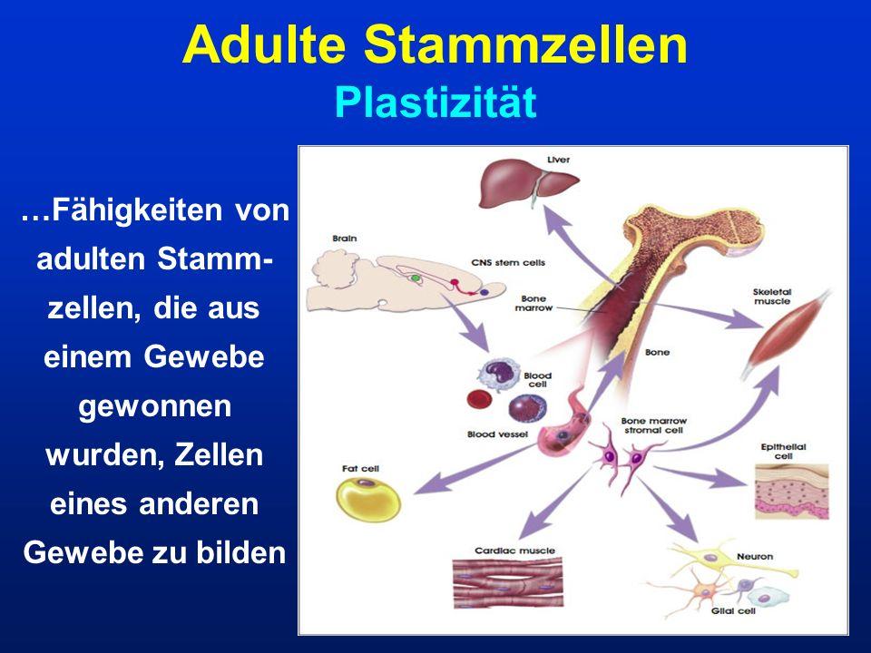 Adulte Stammzellen Plastizität …Fähigkeiten von adulten Stamm- zellen, die aus einem Gewebe gewonnen wurden, Zellen eines anderen Gewebe zu bilden