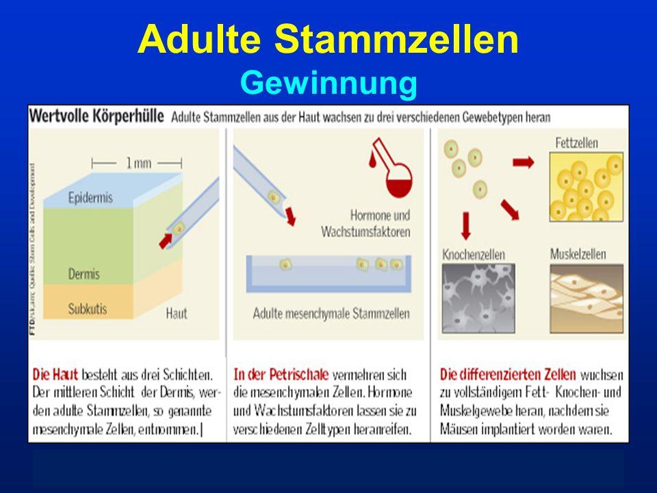Adulte Stammzellen Gewinnung KM-Biopsie PB