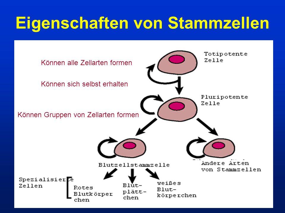Eigenschaften von Stammzellen Können alle Zellarten formen Können sich selbst erhalten Können Gruppen von Zellarten formen
