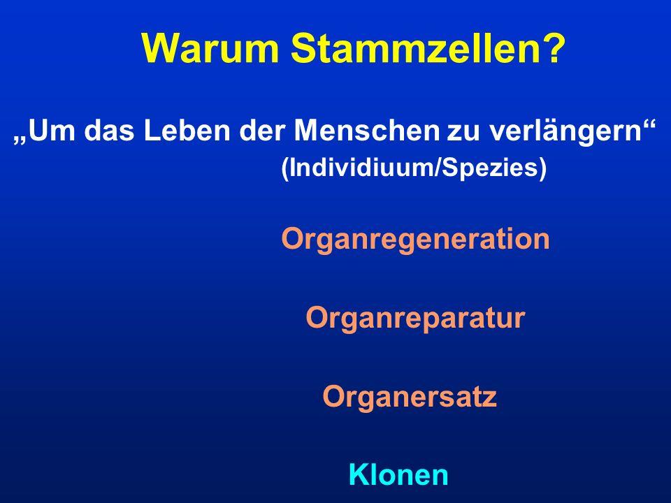 Um das Leben der Menschen zu verlängern (Individiuum/Spezies) Organregeneration Organreparatur Organersatz Klonen Warum Stammzellen?